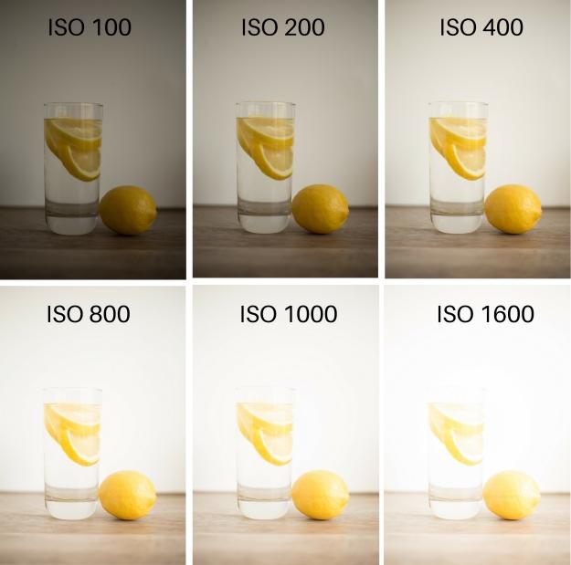 iso photo 101 (1)