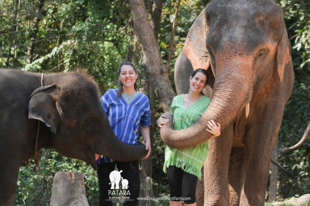 ThailandElephantBlog-3
