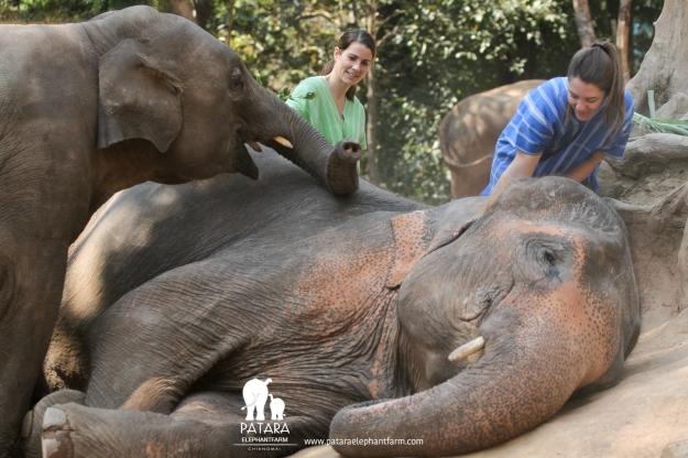 ThailandElephantBlog-4