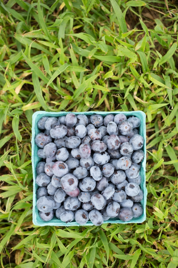 FamilyJuly2019_BerryPicking-17