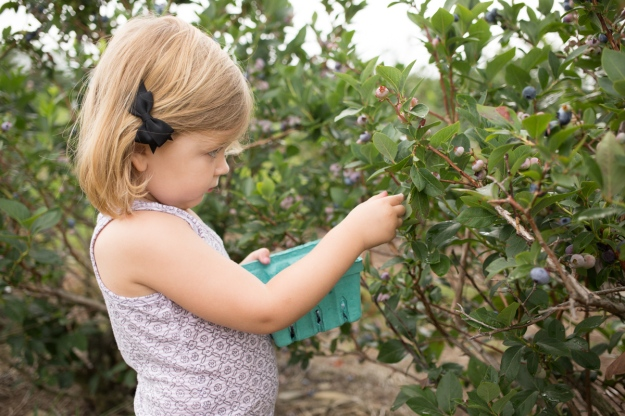 FamilyJuly2019_BerryPicking-8